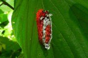 Shag Carpet Caterpillar