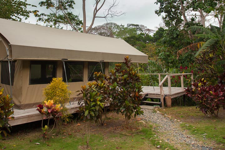 At Canopy Camp each tent is constructed on its own observation deck