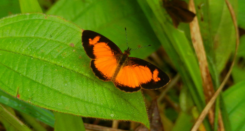 Butterflies and Insects checklist