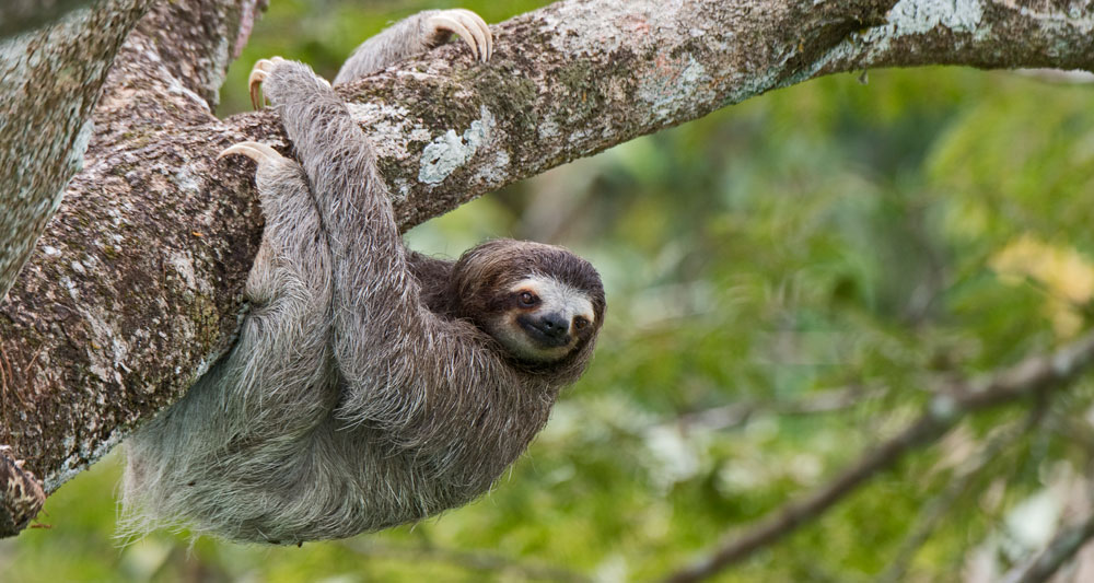 Download checklist of mammals you can see at Canopy Family locations