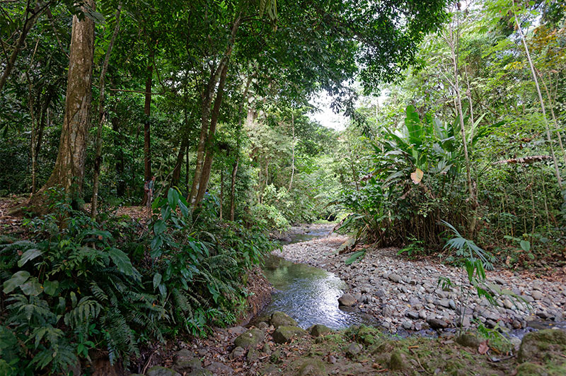 Canopy Tower Tours - Introduction to Tropical Biodiversity