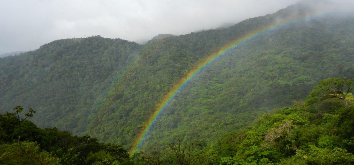 Panama Rainbow