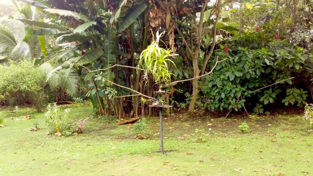 Fruit Feeder at Canopy Camp